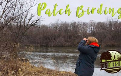 Get Outside and Try Patch Birding or Yard Birding