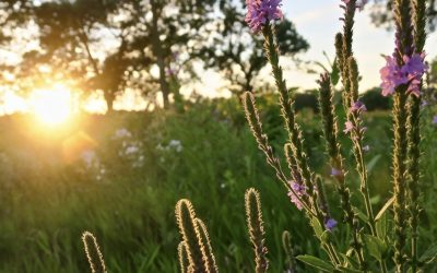Must-See Prairies in Bloom